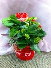 Valentine's Day Dishgarden from Olney's Flowers of Rome in Rome, NY