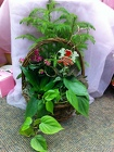 Valentine's Dishgarden Basket from Olney's Flowers of Rome in Rome, NY