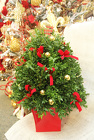 Deck the Halls from Olney's Flowers of Rome in Rome, NY