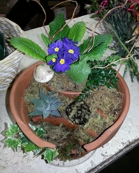 Broken Pot Fairy Garden  from Olney's Flowers of Rome in Rome, NY