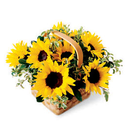 Sunflower Basket from Olney's Flowers of Rome in Rome, NY