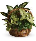 Emerald Garden Basket from Olney's Flowers of Rome in Rome, NY