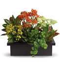 Stylish Plant Assortment from Olney's Flowers of Rome in Rome, NY