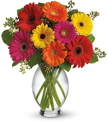 Teleflora's Gerbera Brights from Olney's Flowers of Rome in Rome, NY
