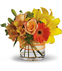 Sunny Siesta - Orange & Yellows  from Olney's Flowers of Rome in Rome, NY