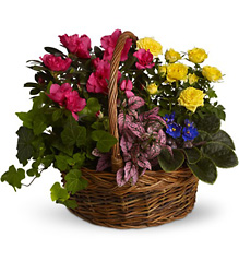 Blooming Garden Basket from Olney's Flowers of Rome in Rome, NY