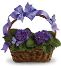 African Violets And Butterflies from Olney's Flowers of Rome in Rome, NY