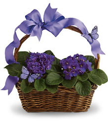Violets And Butterflies from Olney's Flowers of Rome in Rome, NY