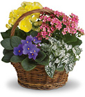 Spring Has Sprung Mixed Basket from Olney's Flowers of Rome in Rome, NY