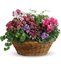 Simply Chic Mixed Plant Basket from Olney's Flowers of Rome in Rome, NY