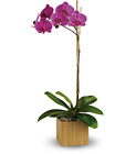 Teleflora's Imperial Purple Orchid from Olney's Flowers of Rome in Rome, NY