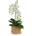 Teleflora's Opulent Orchids from Olney's Flowers of Rome in Rome, NY