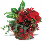 Holiday Planter Basket from Olney's Flowers of Rome in Rome, NY