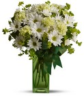 St. Patrick's Day-zies by Teleflora from Olney's Flowers of Rome in Rome, NY