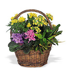 Petite European Basket from Olney's Flowers of Rome in Rome, NY