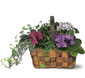 Mixed African Violet Basket from Olney's Flowers of Rome in Rome, NY